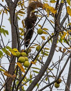 11OCT19 Squirrel-7