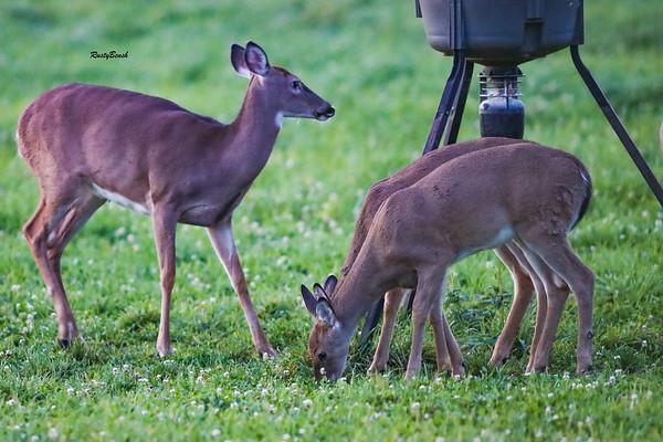24SEPT21 deer-15