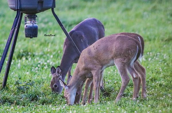 24SEPT21 deer-12