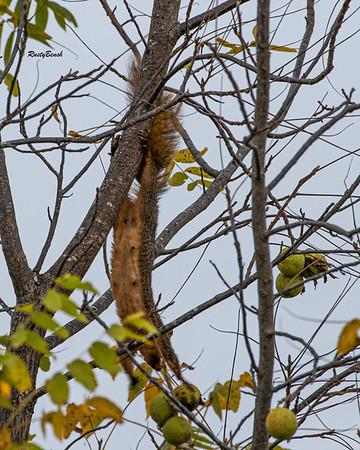 11OCT19 Squirrel-18