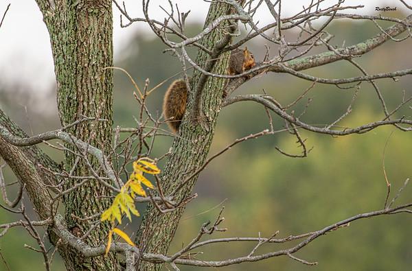 11OCT19 Squirrel-4
