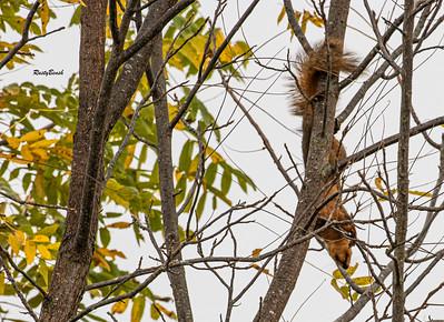 11OCT19 Squirrel-8