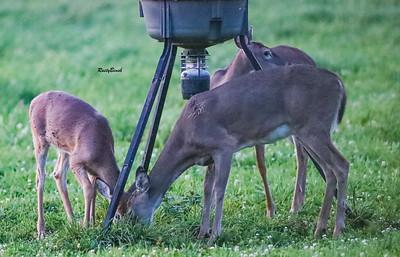 24SEPT21 deer-22