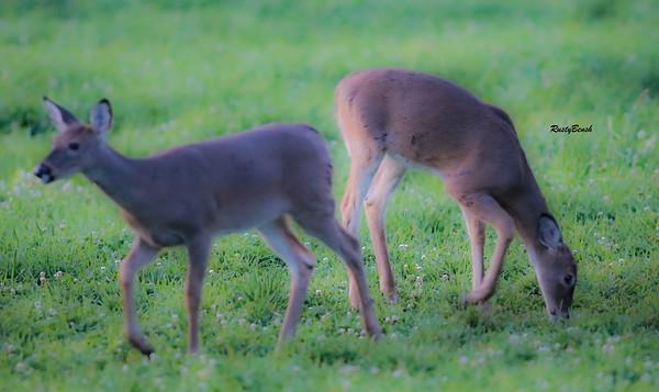 24SEPT21 deer-17