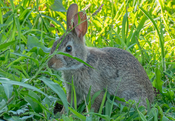 1AUG19 Bunny-12