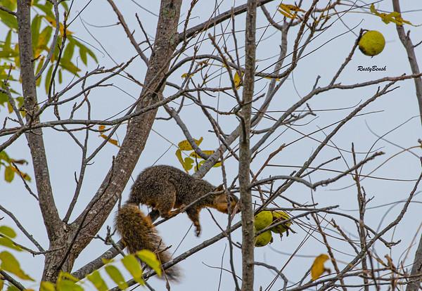 11OCT19 Squirrel-9