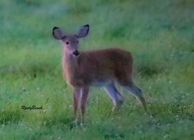 24SEPT21 deer-27