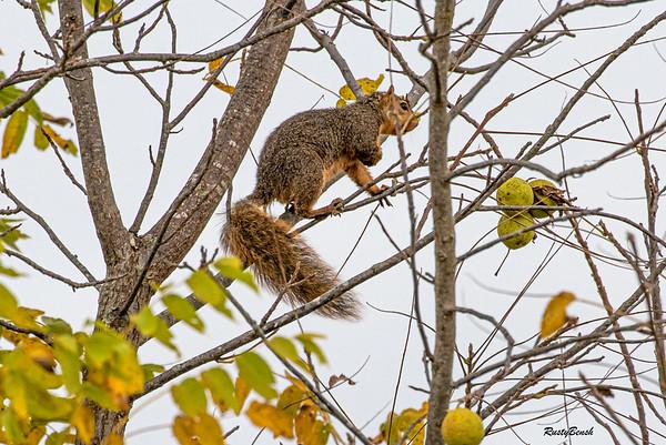 11OCT19 Squirrel-10