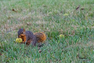 11OCT19 Squirrel-19