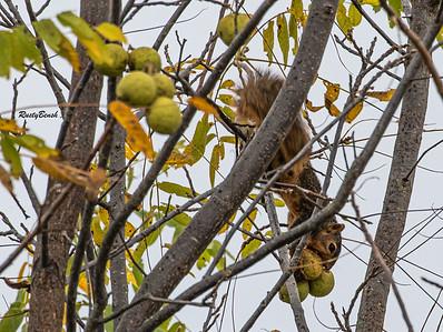 11OCT19 Squirrel-11