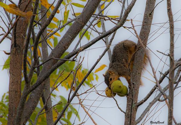 11OCT19 Squirrel-14