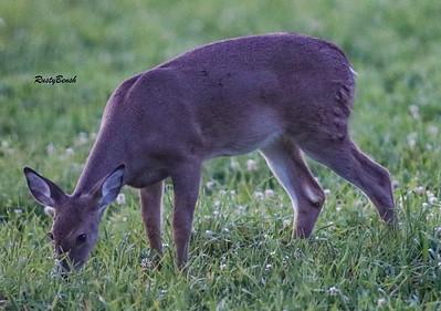 24SEPT21 deer-21