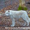 Lakota Wolf Preserve - Saturday 12/1/18