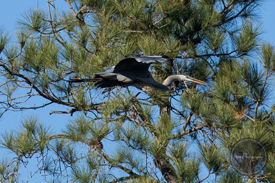 Magnolia Springs State Park Millen GA