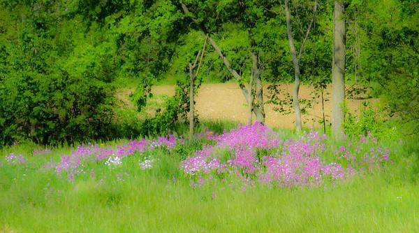 wild-flowers-5