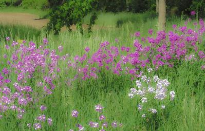 wild-flowers-11