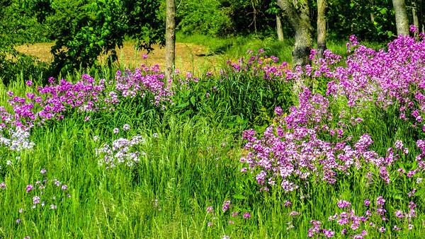 wild-flowers-7