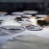 _DSC2870 - Fine Art Photography - Reynolda Gardens #3
