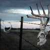 South Dakota Ranch