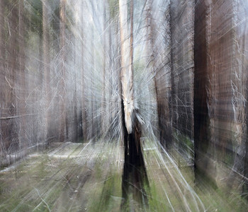 Yosemite, last tree standing