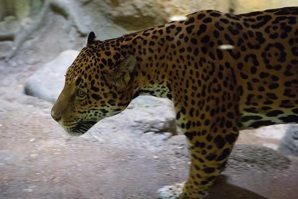 Milwaukee Zoo 2018