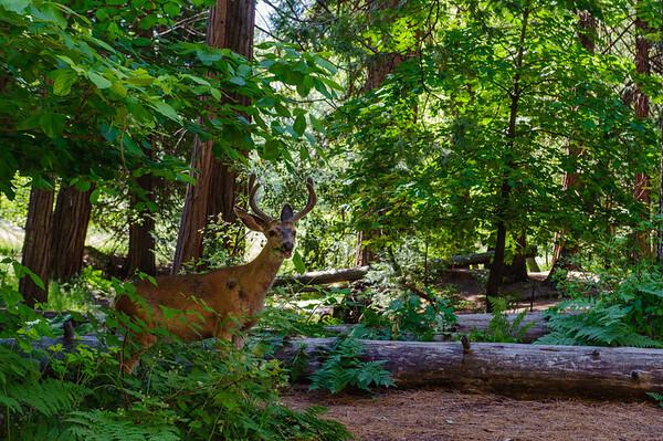 20110718 Yosemite 022