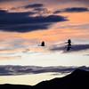20111124 Bosque del Apache 527