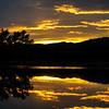 20111124 Bosque del Apache 489