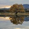 20111124 Bosque del Apache 393