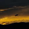 20111124 Bosque del Apache 484