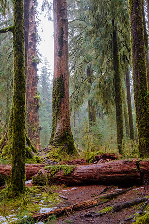 20170311 Hoh Rainforest 005