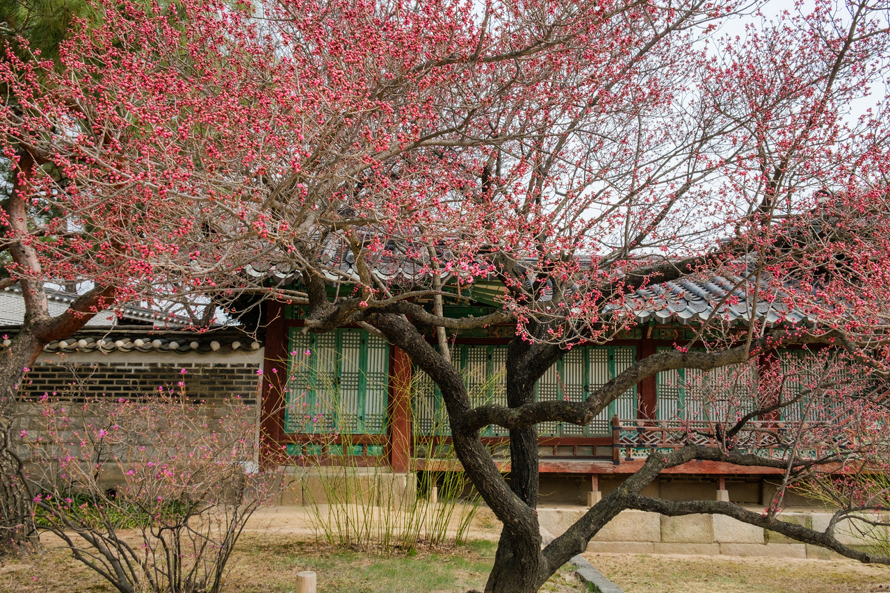 20170325 Changdeokgung Palace 036