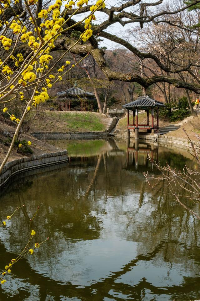 20170325 Changdeokgung Palace 144