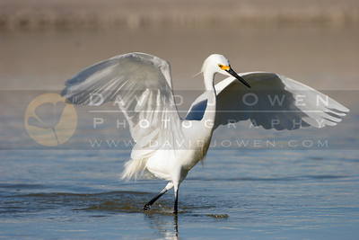 021006-078 1 Snowy Egret