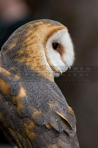 050507-082 Barn Owl