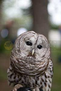 050507-102 Barred Owl