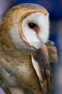 050507-077 Barn Owl