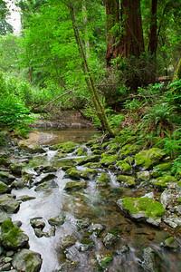 201106709-005 Muir Woods