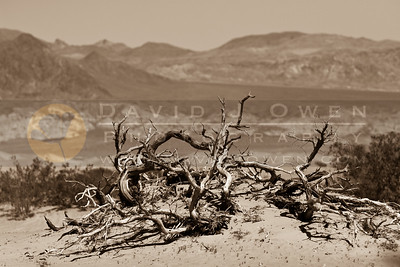 20090327-082 Mesquite bones & Panamint Range