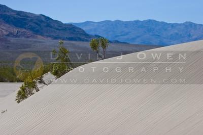 20090327-081 Creosote, dunes & Panamint Range