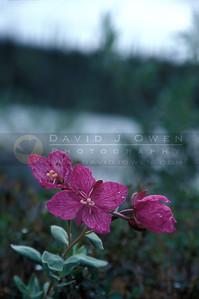 11075 River Beauty