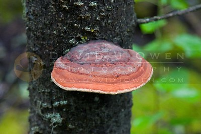 081506-010 1 Fungi
