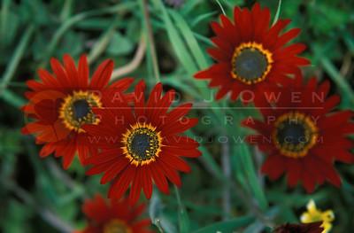 13861 Orange flower at Hosteria Miller