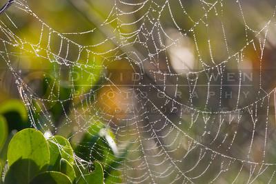 021407-015 Dewy cobweb
