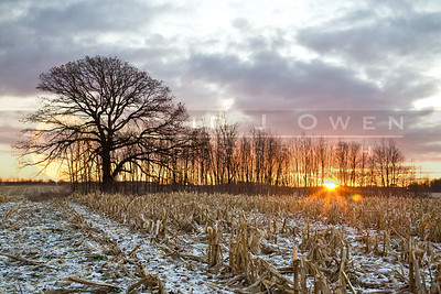 20081121-025 Oak & field sunrise