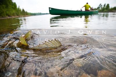 20100523-109 Walleye and canoe