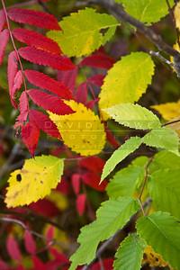 20081012-042 Hyland Lake Park fall color