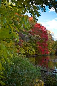 200901009-016 Maple color