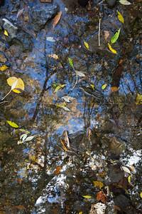 200901009-052 Creek reflection
