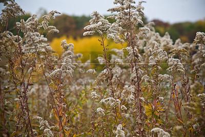 20081012-040 Hyland Lake Park fall color
